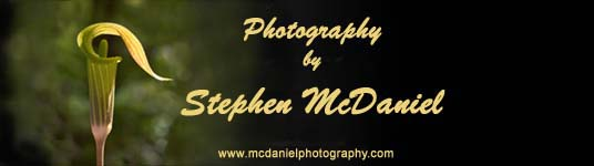 McDaniel Photography name sign